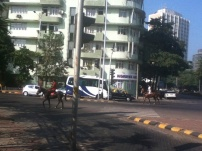 The first day we arrived in Mumbai, we saw people riding horses in the street. I haven't seen that since Philadelphia.
