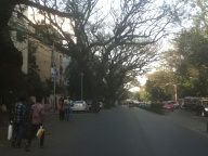 The place of trees in the street
