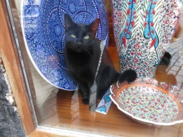 Very well behaved store cat, amongst the china.