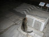 A cat using modern part of the Haya Sofia as a scratching post.