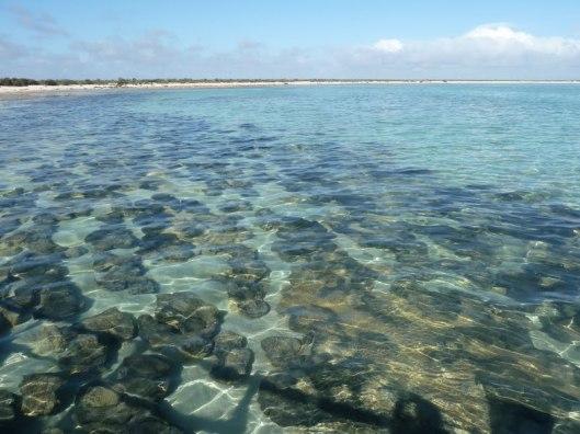 Hamelin Bay Stromatolites