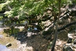 Stream with deer, Nara