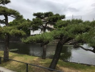 Moat, developed from wetlands of Edo, Imperial Castle, Tokyo