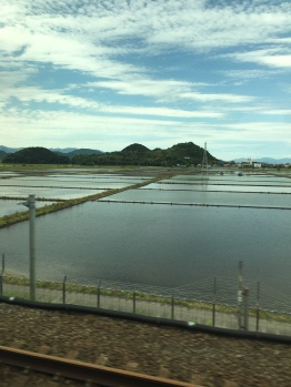 Flooded Rice Paddies, seen from train between Tokyo and Kyoto